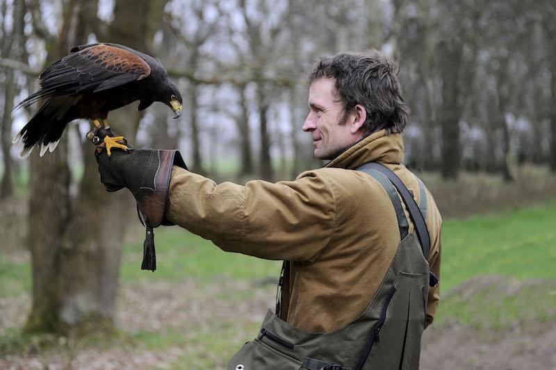 Hawk on man's glove