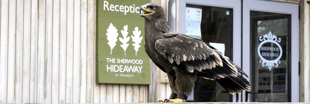 Hawk at Sherwood Hideaway reception