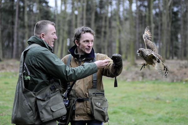 Owl landing on glove