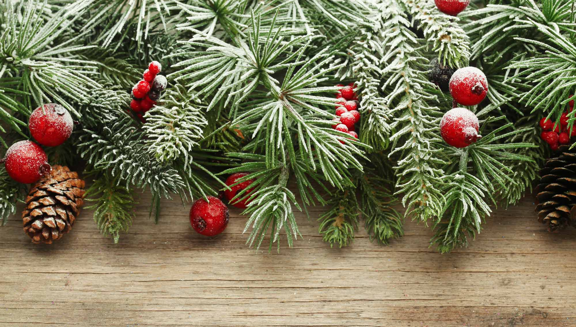 Christmas Break.Christmas Breaks Sherwood Forest Sherwood Hideaway