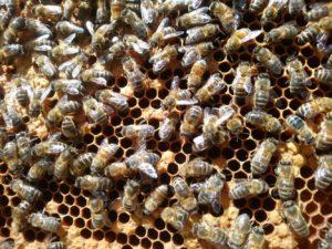 Sherwood-Beehive